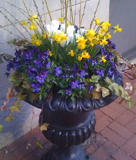 A colorful container garden in Philly.