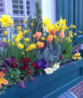 A colorful windowbox in Philly.