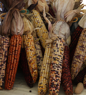 Indian Corn at the Headhouse Square Farmers' Market.