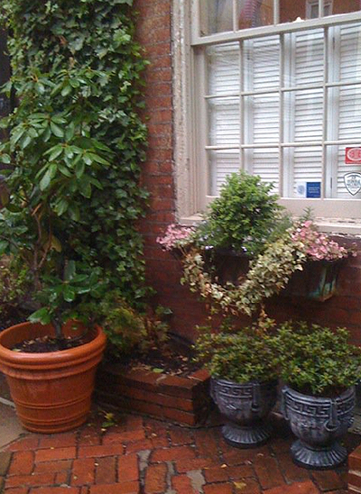 Container gardens in front of a row house in Philadelphia.