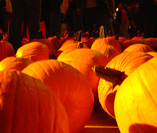 A large gathering of pumpkins at the Grand Central Station halloween festival.