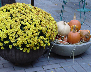 Pumpkins for your row house.