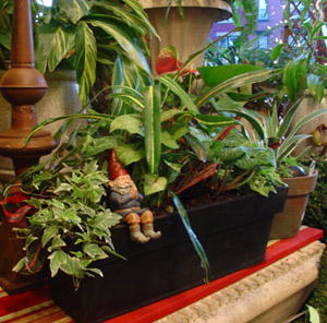 Creative containers for window box gardens.