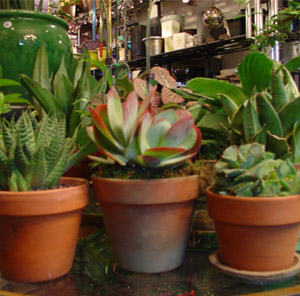Groupings in a container garden, such as these succulents, look very nice.