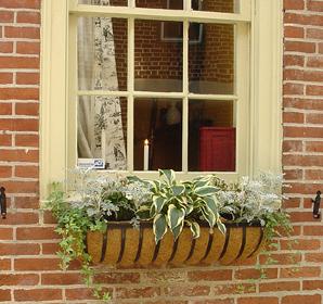 Federal row house window box garden.