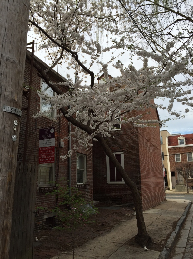 Flowering Tree, Row House Alley